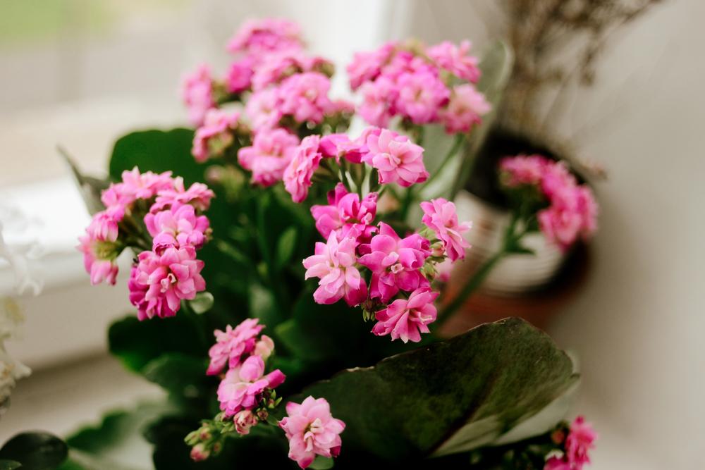 Даже если с растением внешне все хорошо, периодически осматривайте внешнюю и внутреннюю сторону листьев