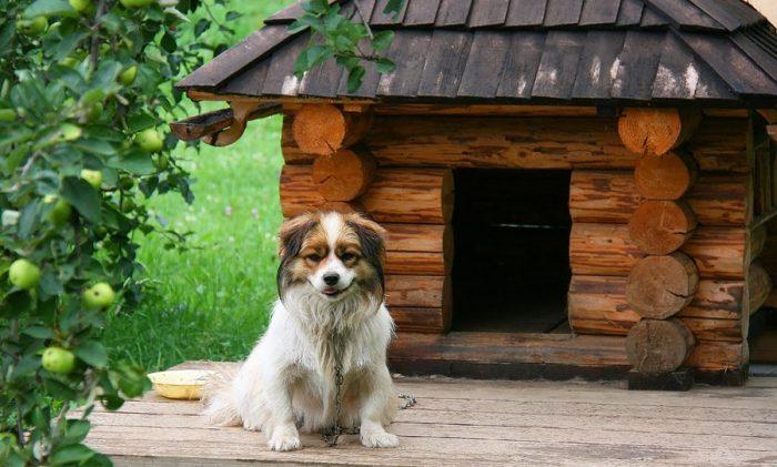 Домашние животные на даче должны жить в достойных условиях