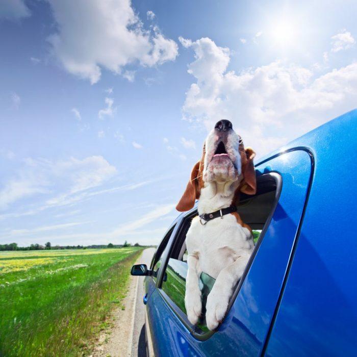 Переезд домашних животных должен быть чётко спланирован