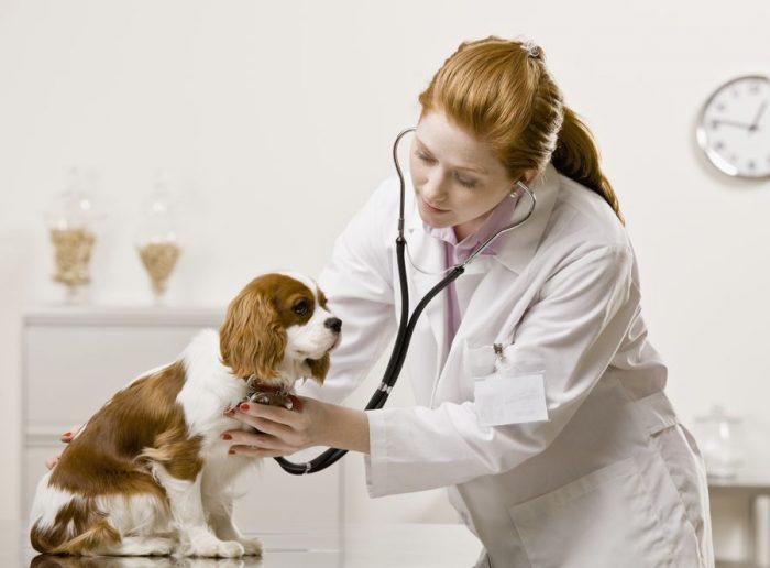 Домашние животные перед поездкой на дачу обязательно должны посетить ветеринара