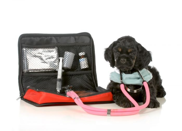 """Аптечка """"скорой помощи"""" для животных всегда должна быть наготове"""