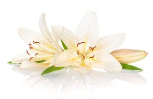 Лилия - очень символичное растение