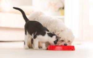 Питание домашних животных на даче не меняем
