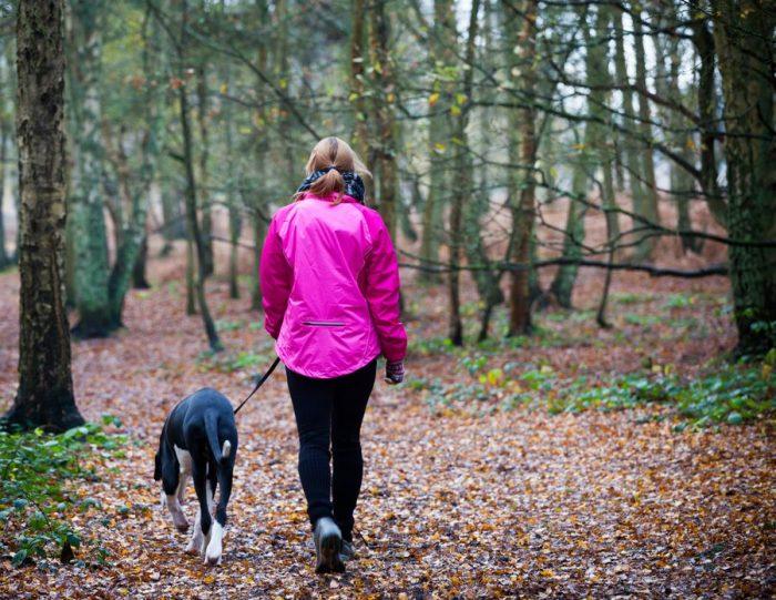 При прогулке по лесу не отпускайте от себя собаку