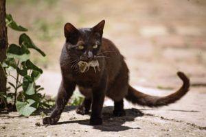 Домашние животные на природе могут вести себя непредсказуемо