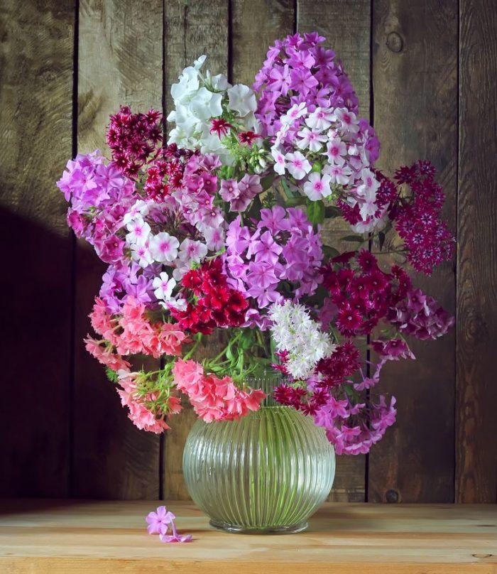 Флоксы в вазе дополнят дачный интерьер своим многоцветием