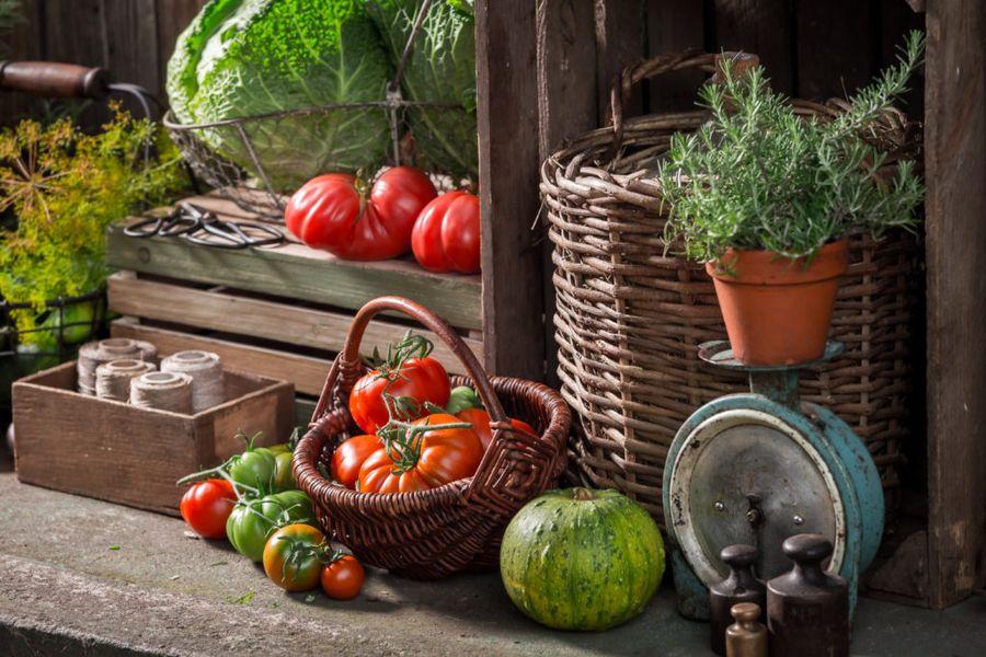 Перед закладкой овощей хранилища надо проветрить и обработать