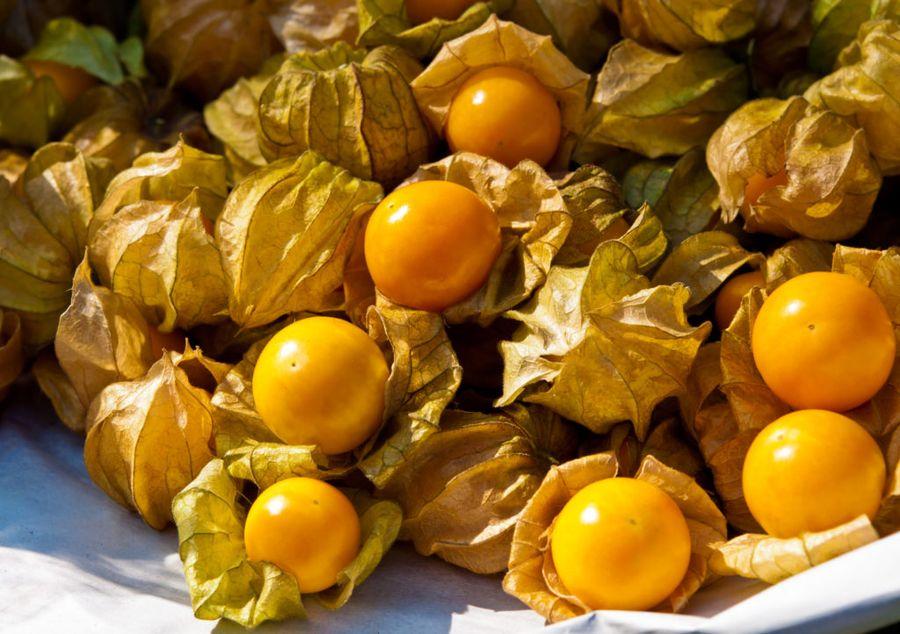 Физалис ягодный родом из Центральной и Южной Америки, но хорошо приживается и в средней полосе России