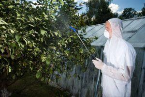 Как растения помогут избавиться от вредителей