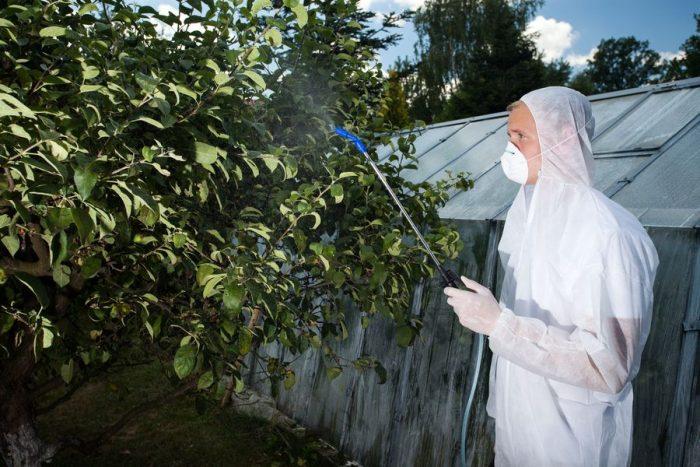 Какие растения помогут избавиться от вредителей