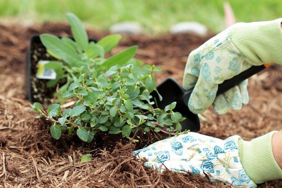 Мульчирование в огороде