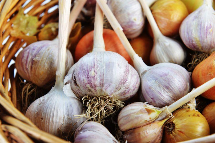 """Лук и чеснок - наиболее """"капризные"""" в хранении овощи"""