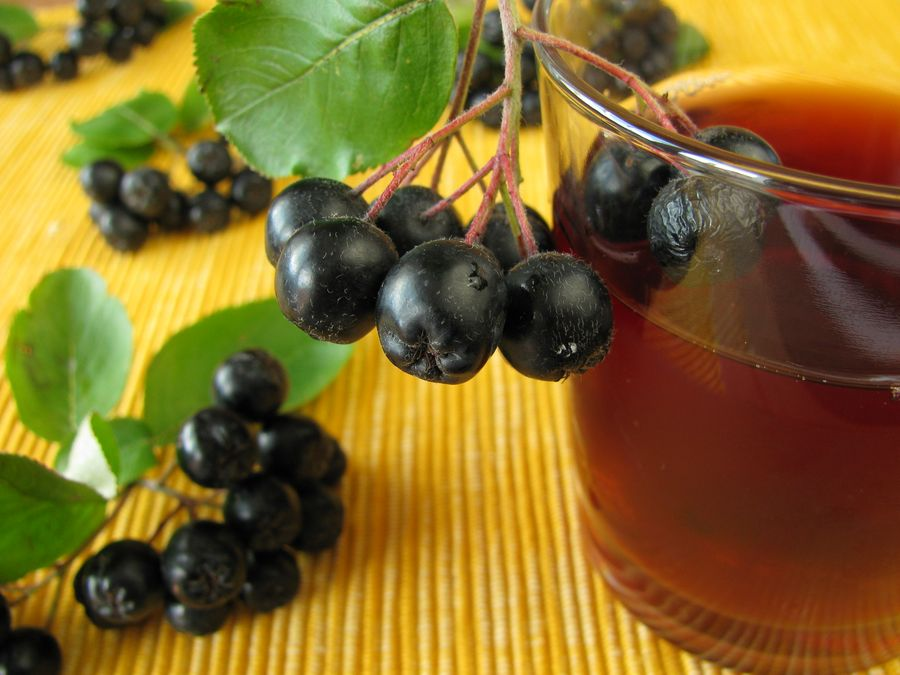 Черноплодная рябина - незаменимый источник витамина Р