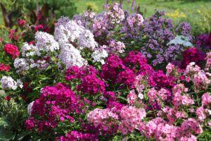 Ароматные растения: 8 лучших представителей