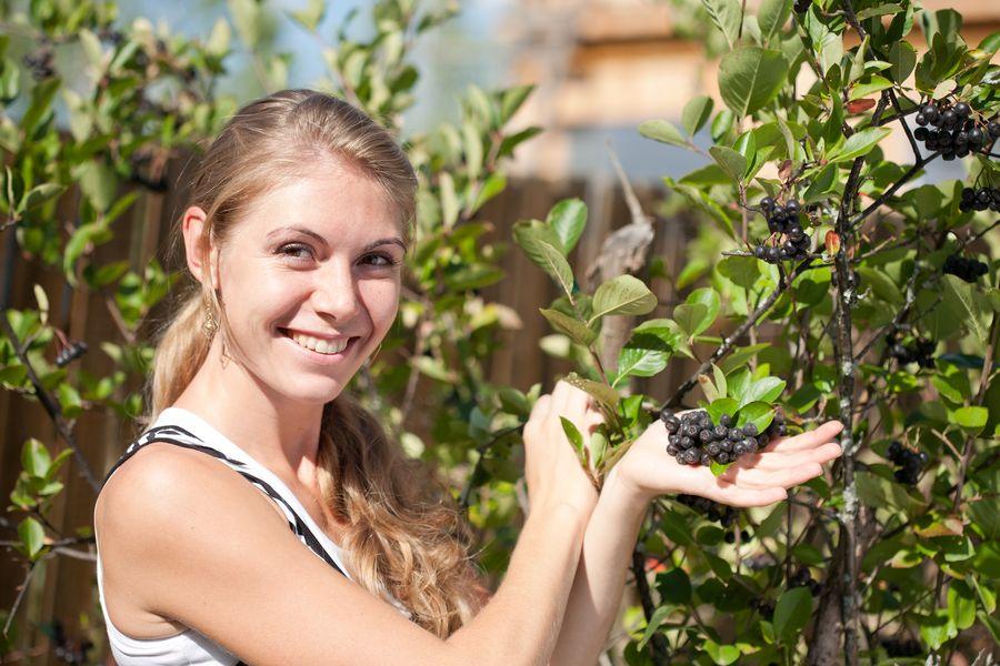 Черноплодная рябина обладает многими ценными свойствами
