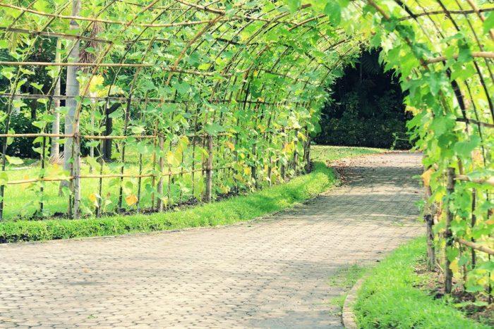 Люффа и арочный тоннель - один из способов совместить дизайн с пользой