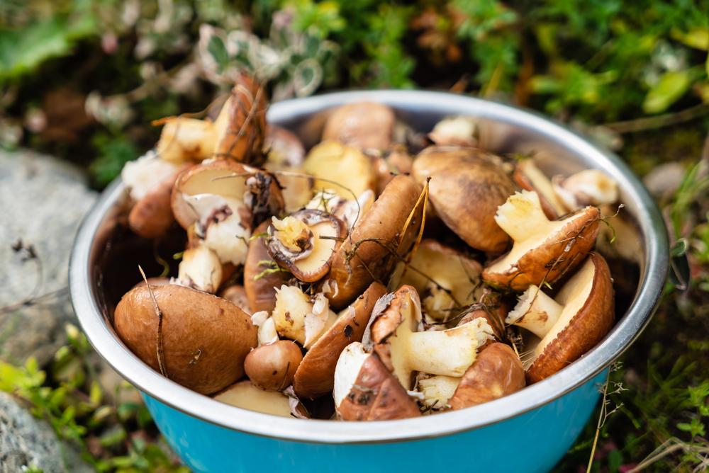 Проще и легче всего чистить сухие грибы.