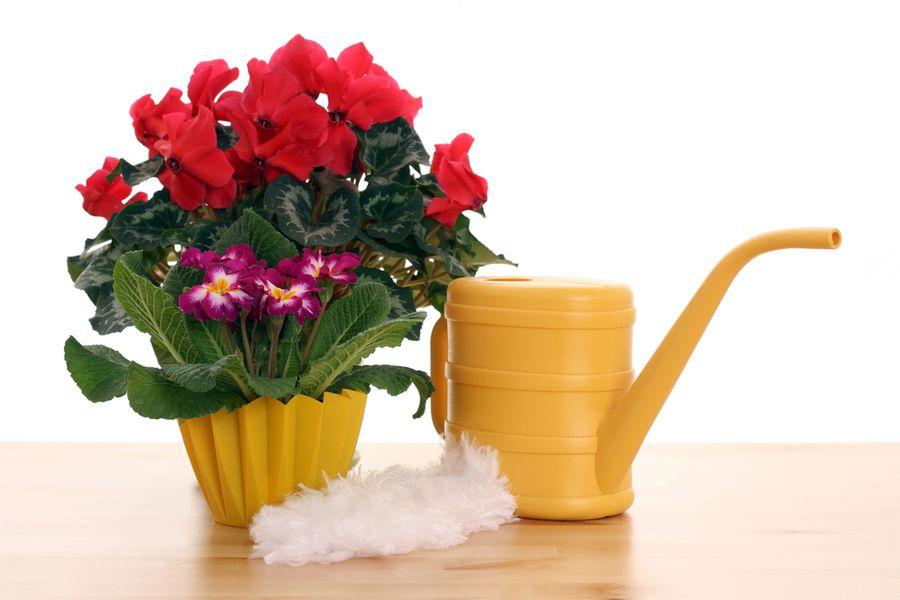 Невесты ранункулюс, чем поливают цветы в магазинах