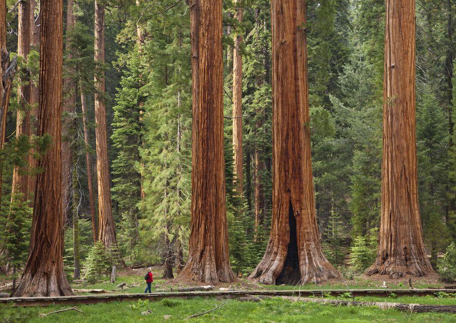 дополнением большие деревья фотографии опишем