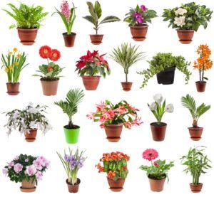 Самые неприхотливые комнатные растения: краткий обзор