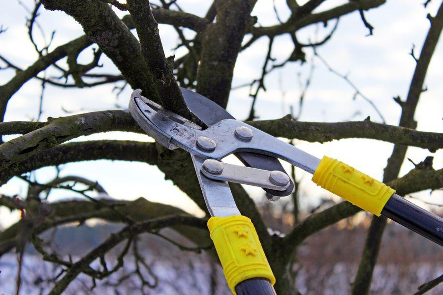 Как правильно обрезать яблоню и грушу весной: советы для начинающих