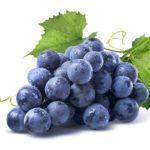 виноград юкка