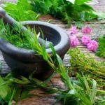 Свежие пряности на столе - плод труда работы в огороде