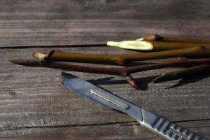 Корнеобразователь для растений необходим, чтобы помочь черенкам быстрее обзавестись корневой системой