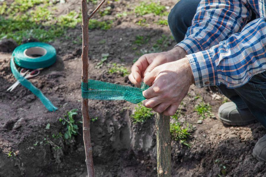 Питомник на даче станет мини-садиком по выращиваю необходимых сортов и видов растений