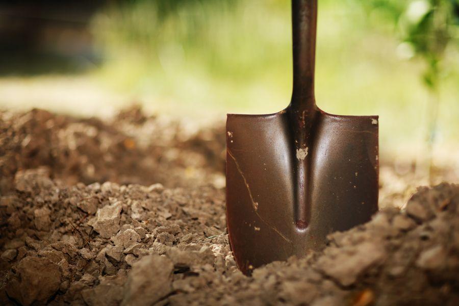Слизни погибают при правильной копке земли весной или осенью