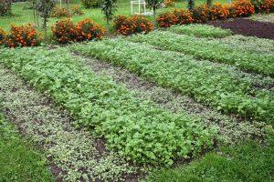 Восстановление плодородия земли