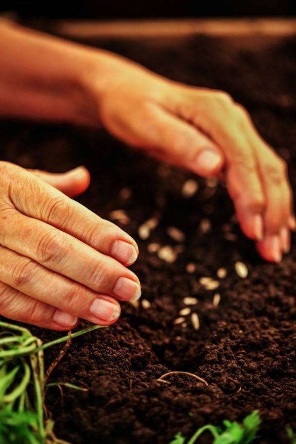 Семена цветов-гибридов не будут иметь родительских признаков