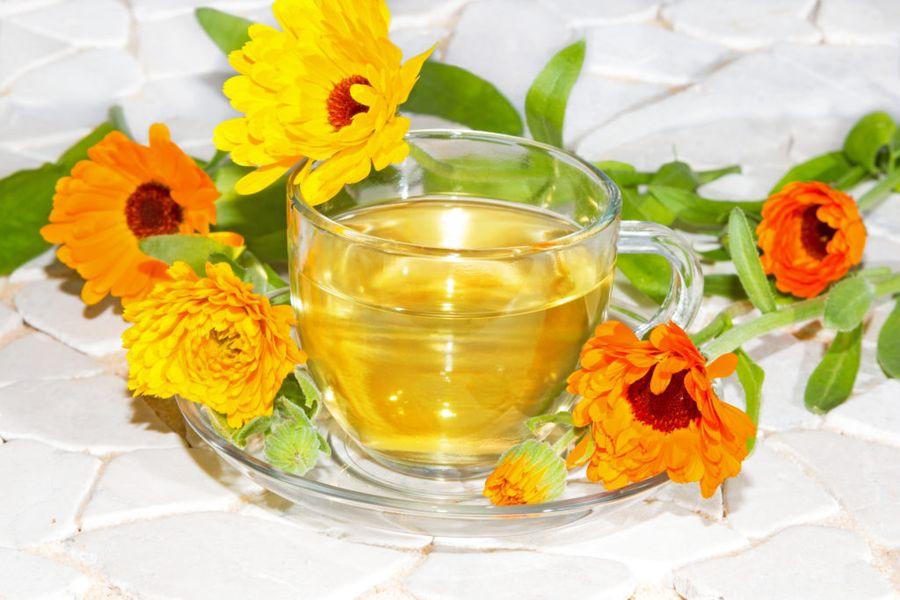 Чай из календулы - любимый многими напиток из цветка