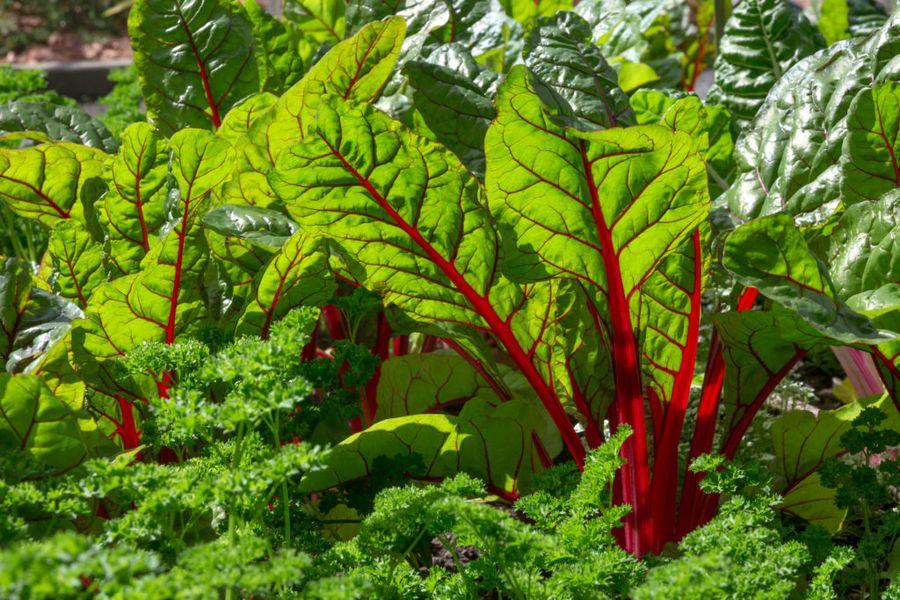 Свекольная и морковная ботва не менее полезны и ароматны, чем другие пряные травы