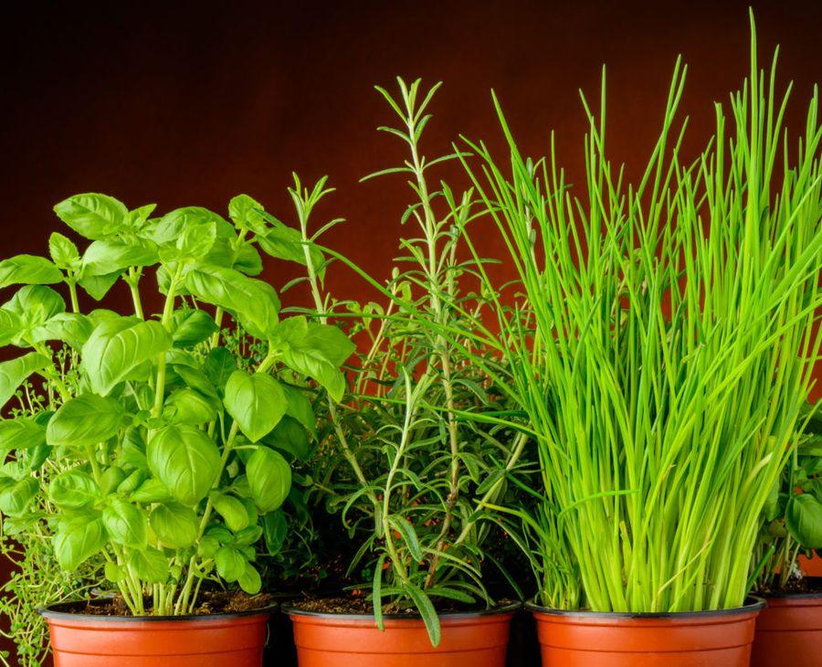 Зелень на подоконнике - красота и польза круглый год