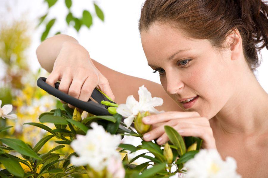 Семенные коробочки можно собирать поэтапно, а можно срезать всю верхнюю часть цветка
