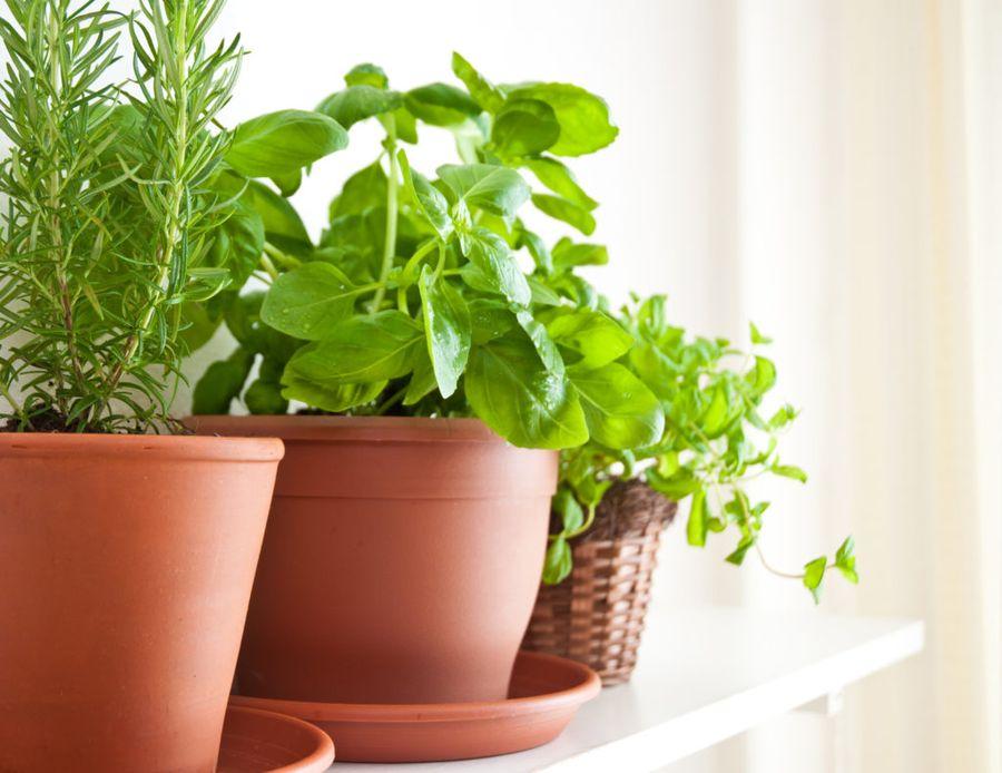 Высаживать зелень на подоконнике можно в любых контейнерах и горшках