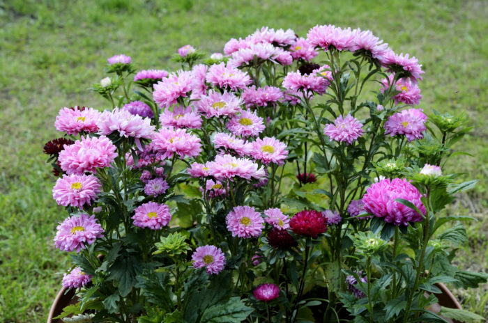 тёплая зима для растений