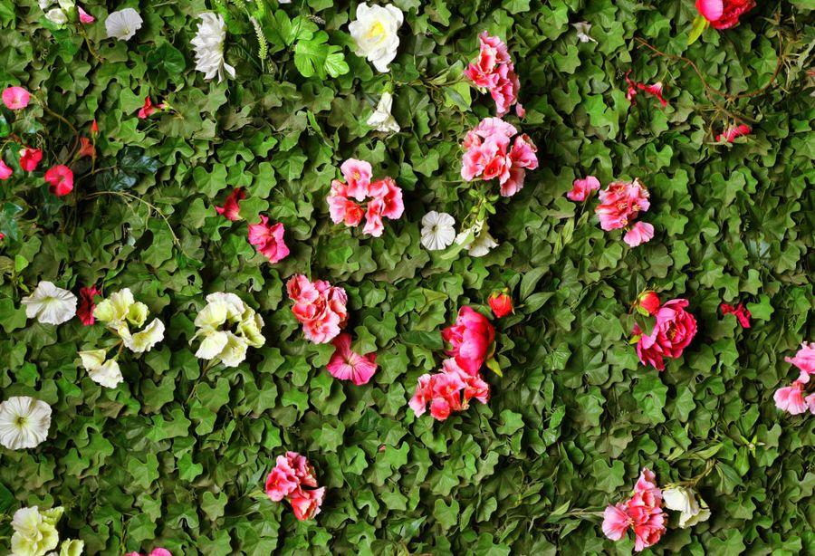 Завуалированные живыми изгородями, вьющимися растениями заборы зрительно раздвигают границы участка