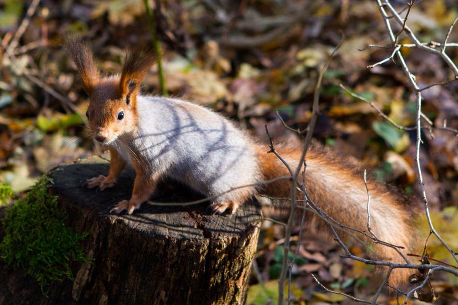 Фундук - лакомство для многих животных, поэтому собирать орехи нужно вовремя