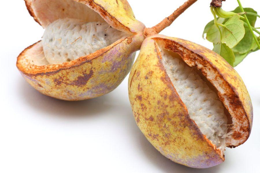 Мякоть плода акебии по вкусу напоминает малину