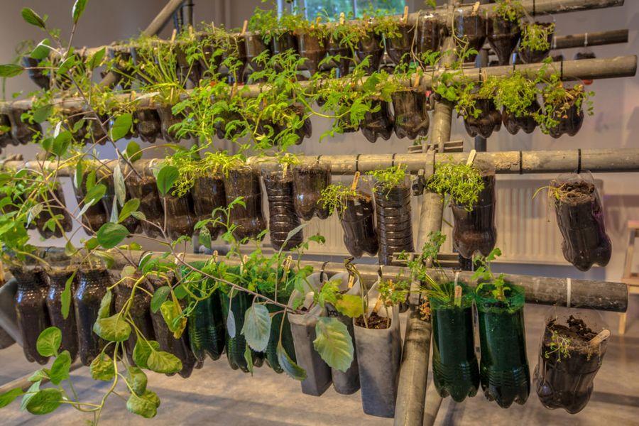 Домашний огород может принять необычные формы