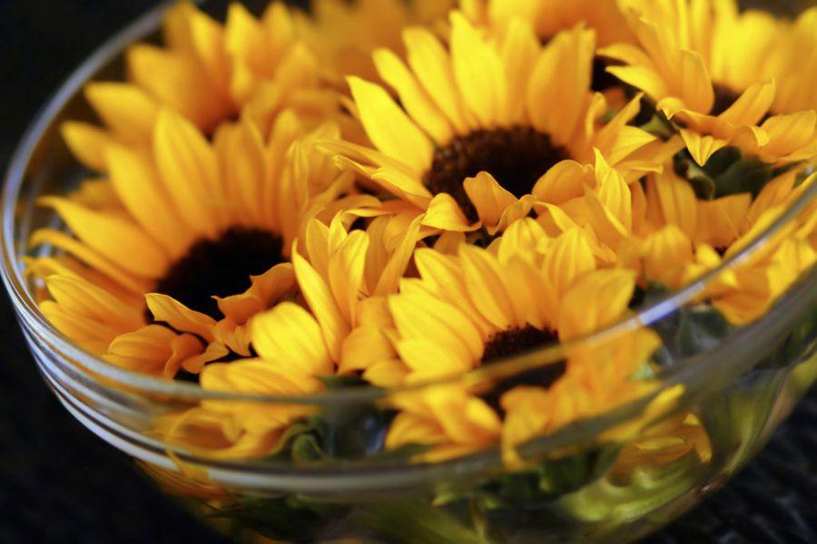 Собирать цветочные семена несложно