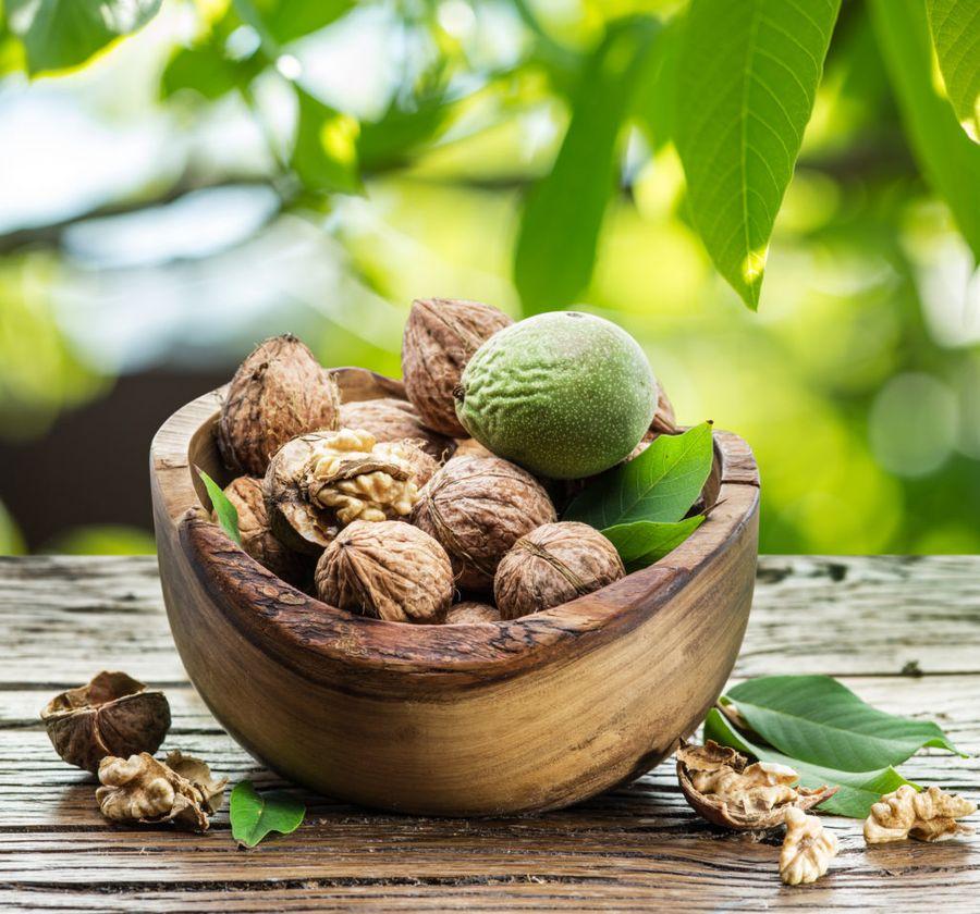 Все части грецкого ореха, даже зелёная оболочка, имеют лечебный эффект