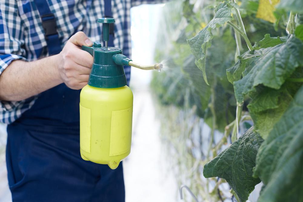 Выбирайте нетребовательные к поливу огурцы, тогда их можно будет просто опрыскивать близко к листьям