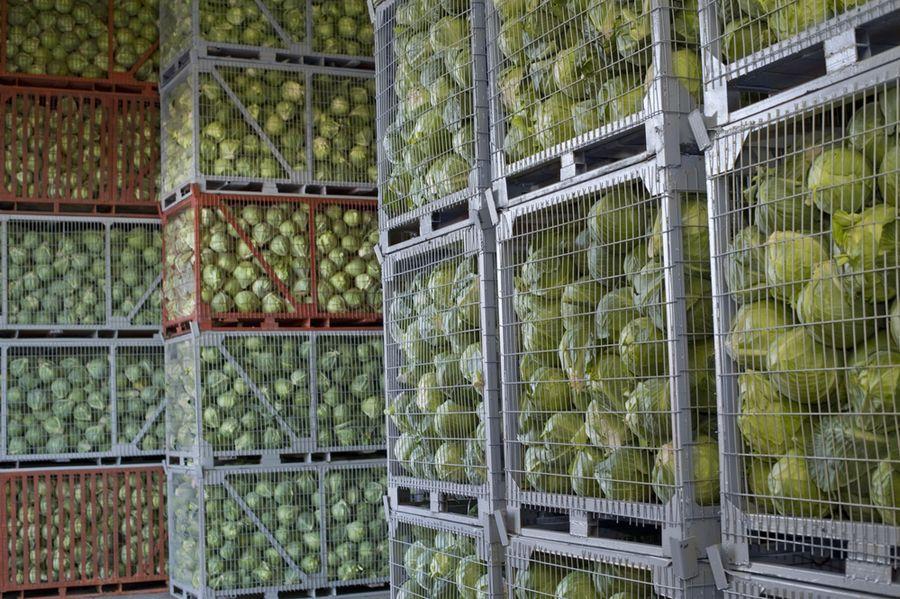 Как подготовить капусту к хранению на зиму