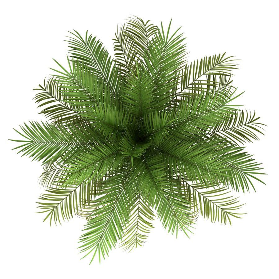 Финиковая пальма, так обильно дающая плоды в природной среде, в домашних условиях не цветёт