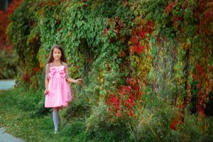 Партеноциссус - Девичий виноград: незаменим для озеленения оград