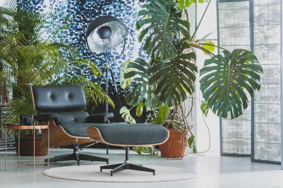 Уход за комнатными пальмами не прост, но результат превосходит ожидания