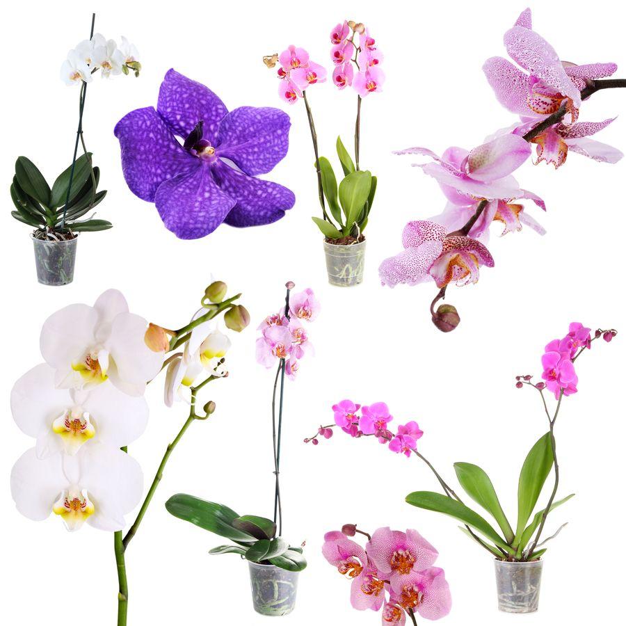 Орхидные - одни из самых распространённых семейств в растительном мире